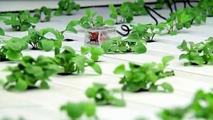 Harvestgeek bindet Pflanzen in die Cloud ein