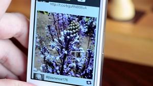 Mehrfokus-Fotos mit dem iPhone und iPad