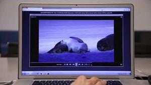 Otoy und Mozilla zeigen ORBX.js