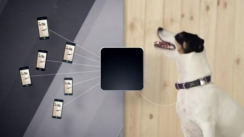 Tier-Fernbetreuung mit Laser, Mikrofon und Kamera