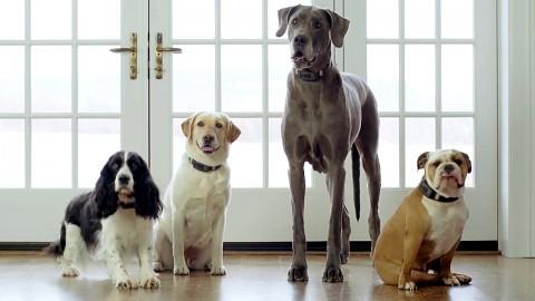 Voyce-Halsband für Hunde - Herstellervideo