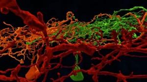 Eyewire - 3D-Karte der Retina