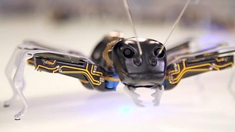 Bionic Ants von Festo - Herstellervideo