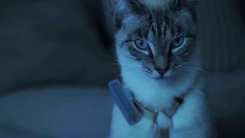 Weenect Cats - Trailer
