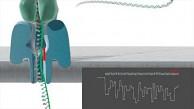 DNA-Sequenzierung mit Minion - Oxford Nanopore