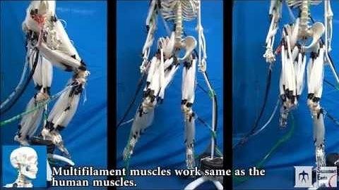 Künstliche Muskeln: Skelettroboter klappert mit den Zähnen - Golem.de