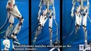 Skelett mit künstlichen Muskeln - Suzumori Endo Lab