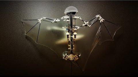 Flugroboter Bat Bot - Caltech