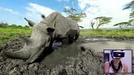 Virtuelle Safari Virry VR - Trailer (PSVR, Launch)