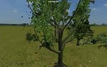 PhysX Apex Vegetation - Trailer von der GDC 2009