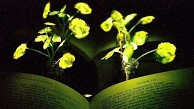 Leuchtende Pflanzen - MIT