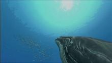 Endless Ocean 2 - Trailer von der E3 2009