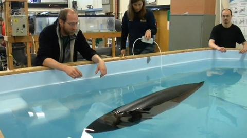 Gymnobot - vom Fisch inspirierter Roboter