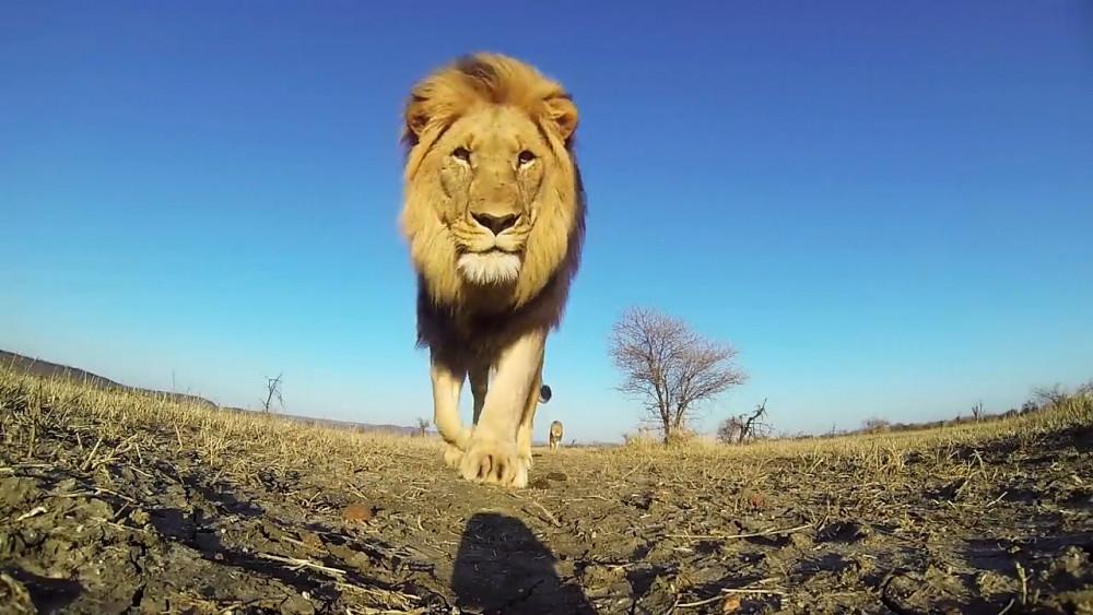 Gopro Tierbegegnungen (Herstellervideo)