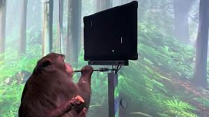 Affe spielt Pong mit Gedankensteuerung (Neuralink Firmenvideo)