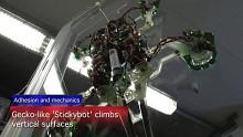 Stickybot klettert an Glasflächen hoch
