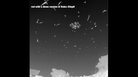 Batcopter fliegt inmitten von Fledermausschwärmen