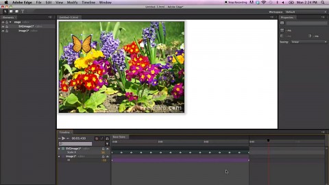 Adobe Edge Preview