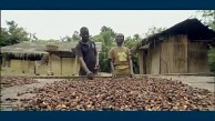IBM und Mars erforschen Kakaopflanzengenom