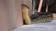 Robotik - von der Schlange lernen