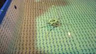 Robotischer Oktopus - Hüpfen