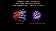 Piezoelektrischer Generator aus Viren