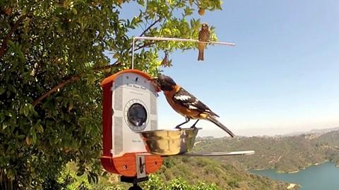 Birds Photo Booth - Vogelhäuschen mit Kamera