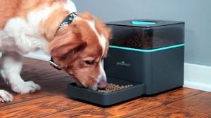 Pintofeed füttert Tiere über das Internet