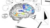 Forscher erklären simuliertes Hirn Spaun